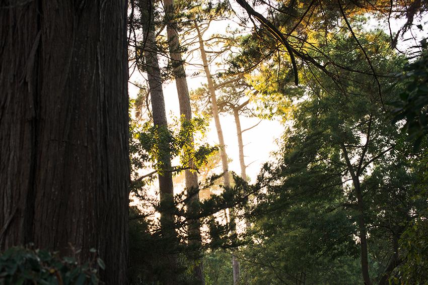 the petticoat coldlilies jewelry sunset sunset tree landscape hossegor