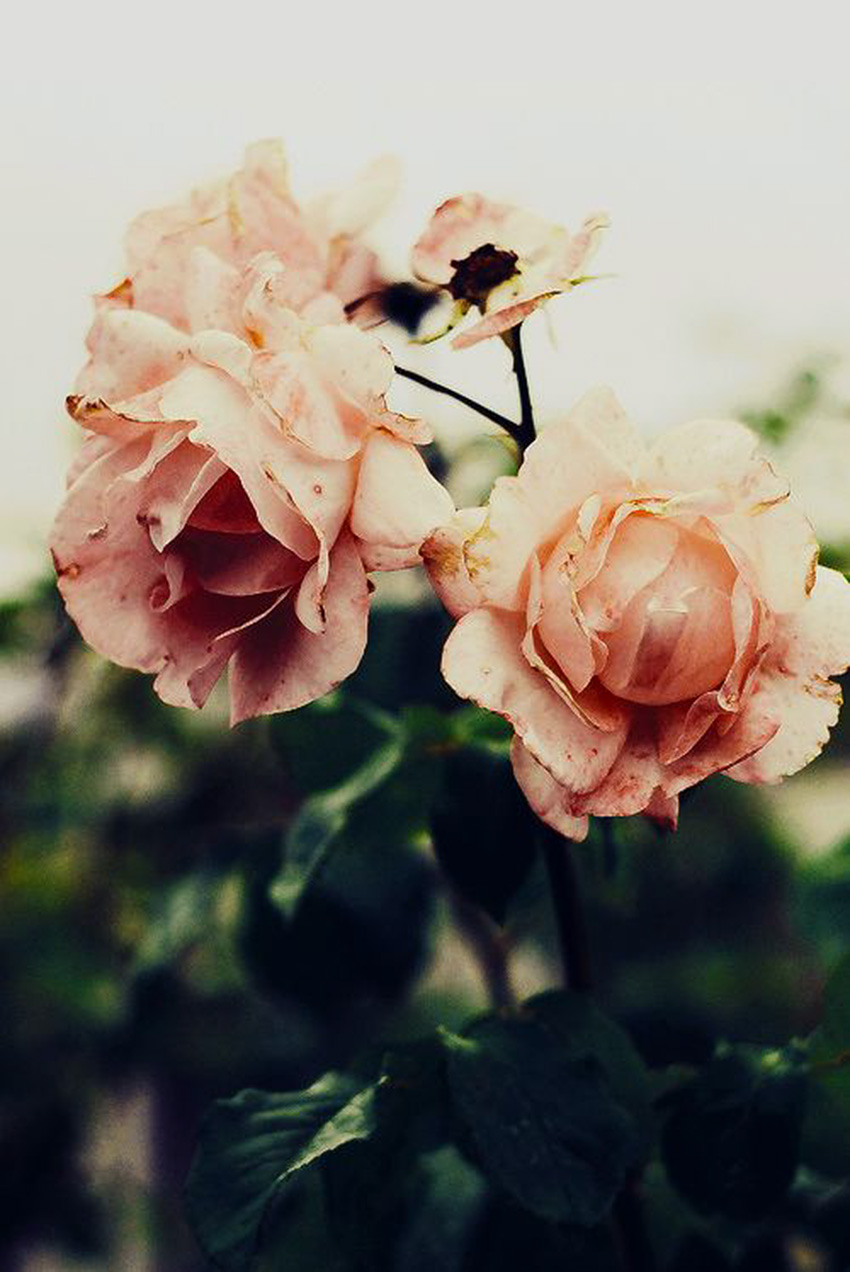Nature Matters-The Petticoat Inspiration (17)