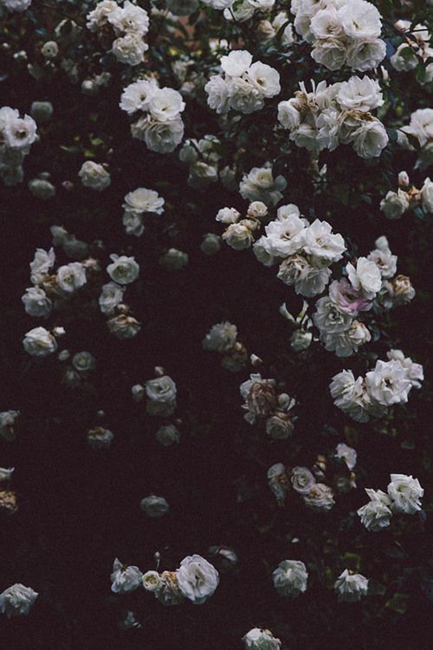 Nature Matters-The Petticoat Inspiration (19)