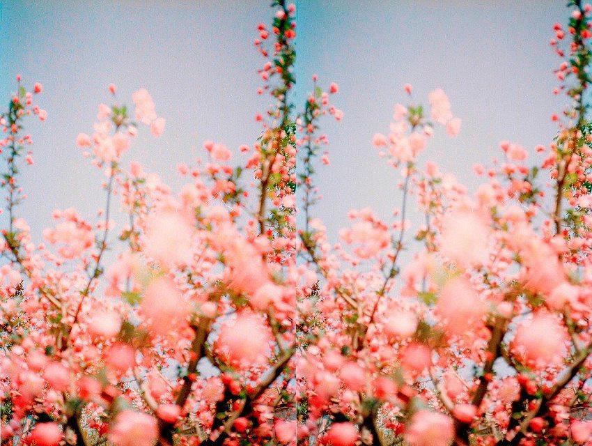 Nature Matters-The Petticoat Inspiration (4)