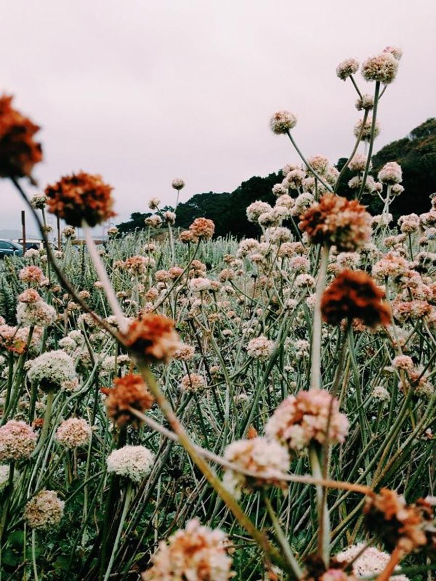 Nature Matters-The Petticoat Inspiration (7)