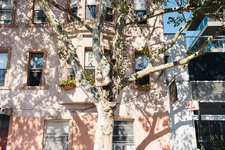 New York  2015 Photo Diary The Petticoat Signs (13)