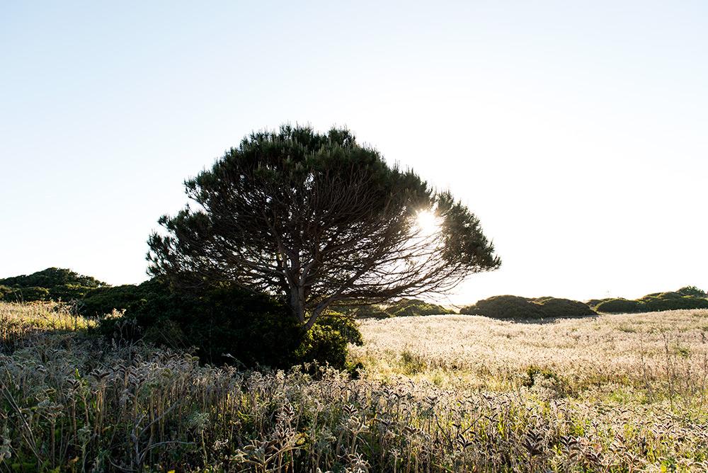 The Petticoat - Portugal Algarve Road Trip 2016 -29