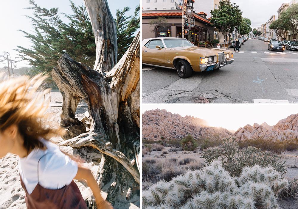 thepetticoat-carmel-bajando-arbol-california-san-francisco